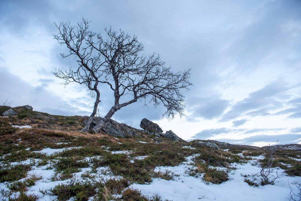 Tre fra kvaløya. Foto